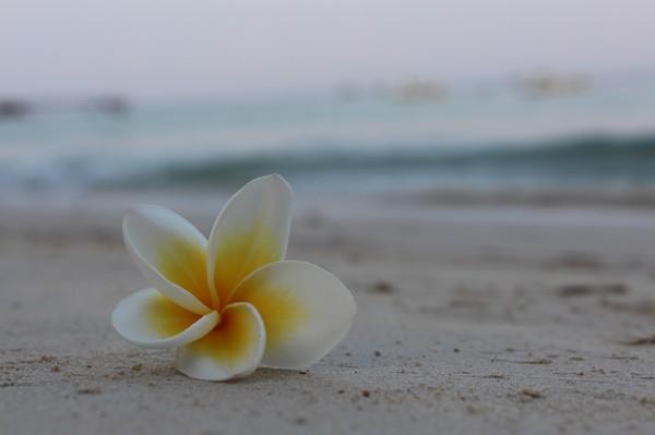 海攤上種花